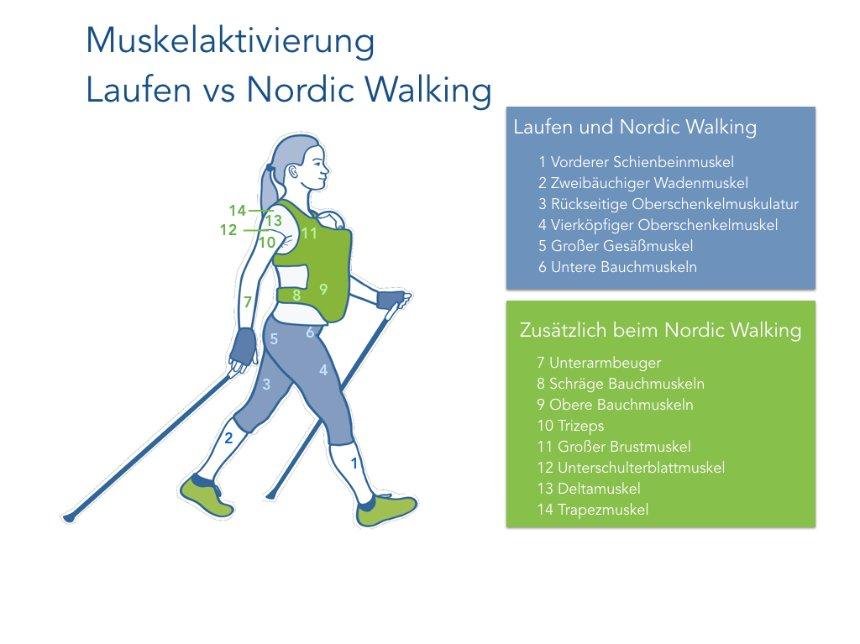 Infografik Nordic Walking